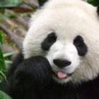 Panda Education