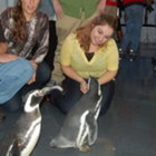 Penguinlvr