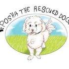 Posha the Rescued Dog