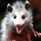 Possum O'Pouch Publishing