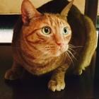 Ragnar the Cat