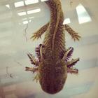 Salamander Science