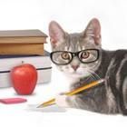 Schoolcat By Sloan