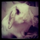Science Bunny