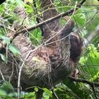 Science Sloth
