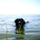 Sea Dog Science