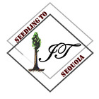 Seedling to Sequoia