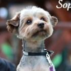 Sophie the Wonderdog's Worksheets
