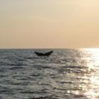 Sound and Sea