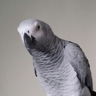 Special Parrot Productions