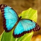 Teacher Butterfly