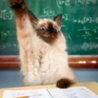 Teacher Kitty