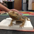 Teaching With a Dragon