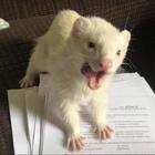 The Academic Ferret