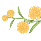 The Aussie Lesson Larder