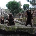 The Bio Bears