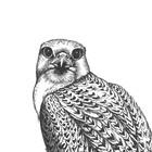 The Bird Scoop