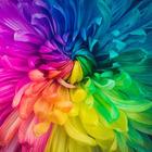 The ESL Rainbow