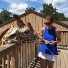 The Giraffe Teacher