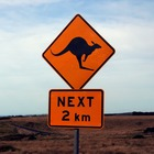 The Handy Hedgehog