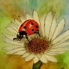 The Ladybug's Loft