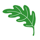 The Learning Leaf Life
