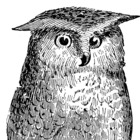 The Old Owl