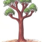 The Tree of Knowledge