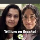 Trillium En Espanol
