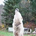 White Wolf Works