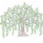 Willow Tree Math